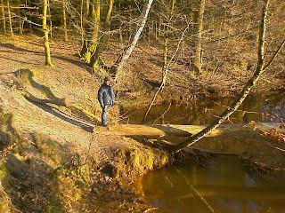 Tief im Harpstedter Forst